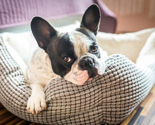 Mastocitoma nel cane: sintomi e cure